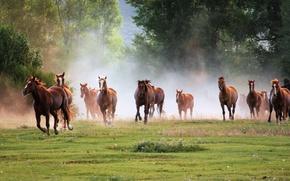 Picture horse, horse, horses, horse