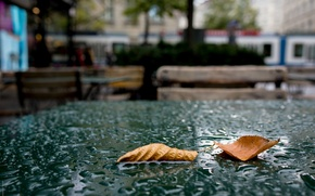 Wallpaper table, Autumn, leaves, drops