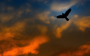 Picture the sky, clouds, bird, wings, glow