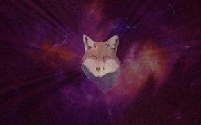 Picture Fox, Space, Fox
