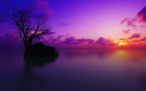 Wallpaper color, tree, sunset