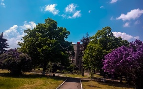 Picture the city, Park, spring, lilac