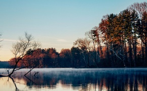 Picture forest, trees, fog, lake, surface, morning, late autumn