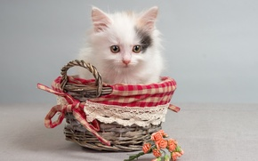 Picture flowers, kitty, basket, roses