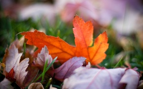 Picture autumn, grass, color, macro, nature, photo, background, Wallpaper, bright, blur, leaves, bokeh