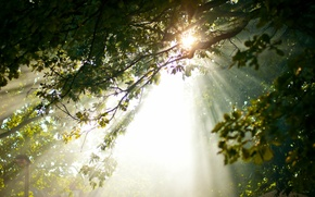Picture light, trees, nature, morning