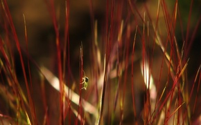 Picture grass, leaves, myopia, bug, red garbage