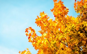 Picture autumn, the sky, leaves, macro, trees, background, tree, Wallpaper, blue, blur, yellow, wallpaper, leaves, sky, …