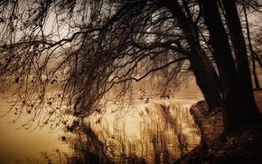 Picture autumn, lake, pond, Park, tree