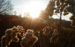 Picture grass, Sun, Meadow, shrubbery