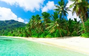 Picture sand, sea, beach, the sun, tropics, palm trees, the ocean, shore, island, summer, beach, sea, …
