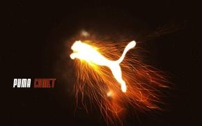 Picture fire, flame, power, Brand, Puma, Puma