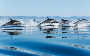 Picture sea, drops, squirt, speed, pack, dolphins, jumping