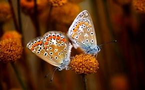 Picture Eyes, Butterflies, Stalk, Antennas, Black & White Dots, Copulating, Dots
