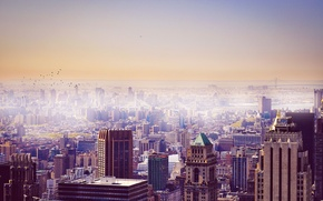 Picture the sky, birds, the city, building, New York