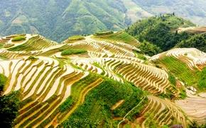 Picture field, China, terrace, Guilin, Guangzhou