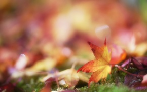 Picture autumn, leaves, moss, blur, leaf, bokeh