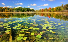 Wallpaper lake, autumn, forest, nature