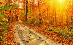 Picture Nature, Road, Autumn, Forest, Leaves