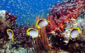 Wallpaper sea, Underwater world, corals, fish