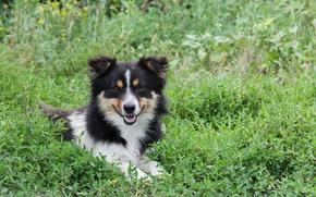 Picture animals, grass, dog