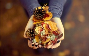 Picture photography, beautiful, autumn, leaves, gift, pinecones