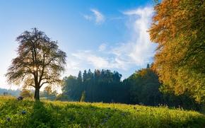 Picture trees, Switzerland, meadow, Switzerland