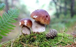 Picture mushrooms, moss, bump, mushrooms
