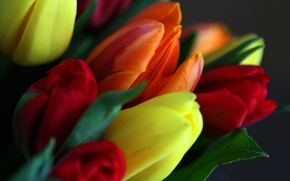 Picture leaves, bouquet, spring, petals, tulips