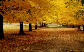 Picture road, autumn, leaves, trees, landscape, nature, Park, yellow, alley