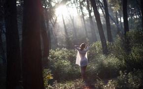 Picture forest, girl, Rosa, morning, sunlight