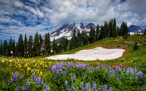 Picture the sky, grass, clouds, landscape, flowers, mountains, nature, spring