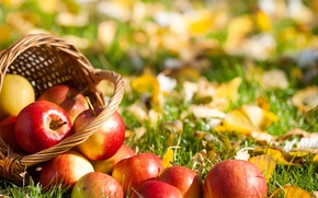 Picture grass, leaves, basket, apples, fruit