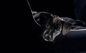 Picture eyes, dog, bag