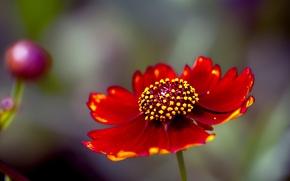 Picture flower, summer, paint, petals, stamens