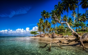 Picture tropics, palm trees, the ocean, coast, snag, The Atlantic ocean, Caribbean Islands, Dominican Republic, Caribbean, ...