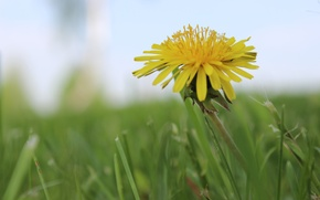 Picture yellow, green, mood, dandelion