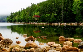 Picture forest, trees, fog, river, stones, USA, Maine, Acadia National Park