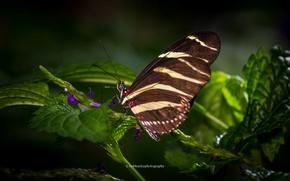 Picture flower, butterfly, wings