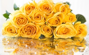 Picture drops, yellow, reflection, rose