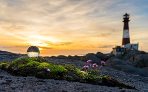 Picture sea, sunset, flowers, lighthouse, moss, yellow sky, glass ball