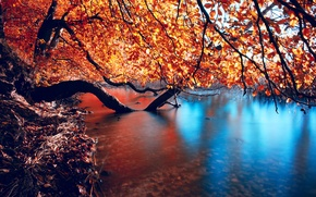 Picture autumn, branches, nature, river, smoothness