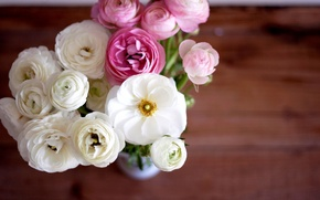 Picture vase, flowers, ranunculus, bouquet, white, petals, pink, buttercups, buds