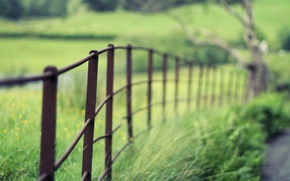 Picture macro, widescreen, widescreen, macro, nature, blur, the fence, HD wallpapers, Wallpaper, the fence, greens, full …