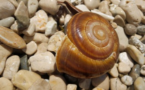 Picture beach, stones, snail