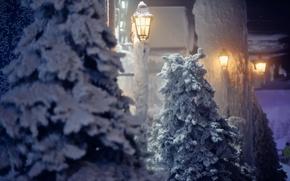 Picture winter, snow, trees, nature, lantern