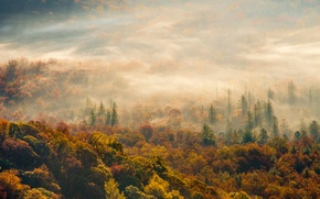 Picture autumn, forest, fog, morning