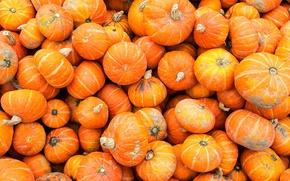 Picture autumn, paint, pumpkin, market
