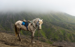 Picture mountains, nature, animal, horse
