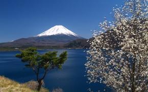 Picture the sky, Japan, mountain, Sakura, Fuji